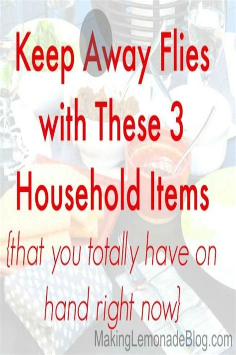 How To Keep Flies Away From Backyard by Best 25 Keep Flies Away Ideas On Backyard