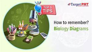 How To Remember Neet Biology Diagrams  Top 5 Tips