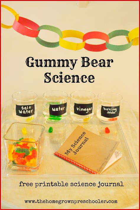 preschool science experiment science with preschoolers building thought processes 482