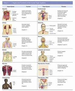 11 Organ Systems of the Human Body and Their Functions ...