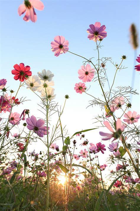 Beautiful Wild Flower Garden