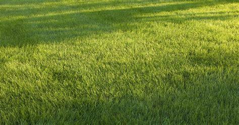 How To Kill Grass Fungus  Ehow Uk