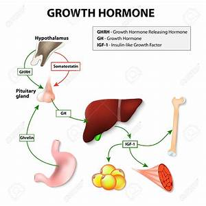 Pituitary Hormones Clipart Collection