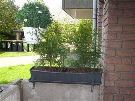 sichtschutz aus pflanzen f 252 r balkon gesucht garten