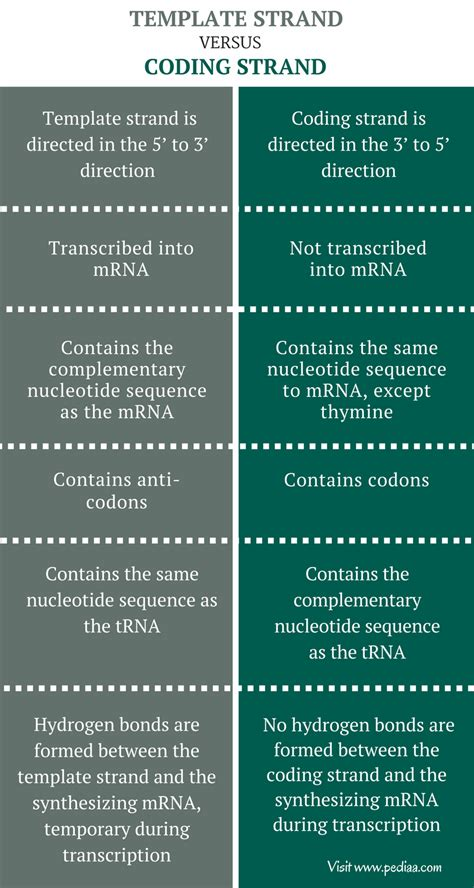 difference between template strand and coding strand difference between template and coding strand definition characteristics structure
