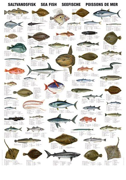 sea fish types  india tamil nadu sea fish types