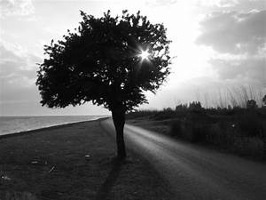 Tree Black And White Cool Backgrounds Wallpapers 4334 ...
