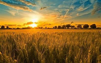 Field Sunset Wheat Background Desktop Wallpapers Church