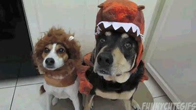 dog halloween gif find share  giphy
