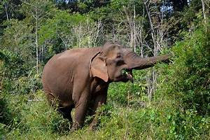 EAL - Vietnam: new plan to protect the elephants