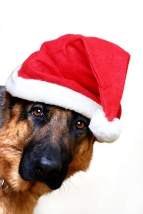 merry christmas images with dogs 3 simple tips for a merry christmas with your dog