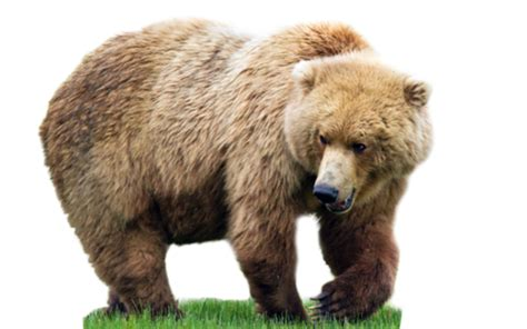 Скачать игры на андроид для детей маша и медведь