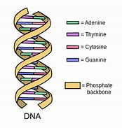 Hd wallpapers simple dna structure diagram 21love3d hd wallpapers simple dna structure diagram ccuart Images
