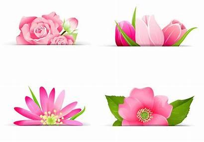 Banner Flower Pink Vector Psd Pack Photoshop