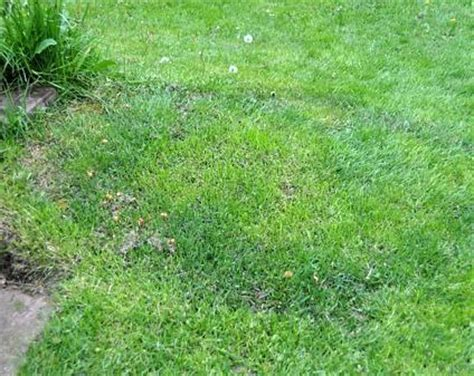 Im Rasen Kreisförmig by Hexenring Im Rasen Gartenhaus Gebraucht