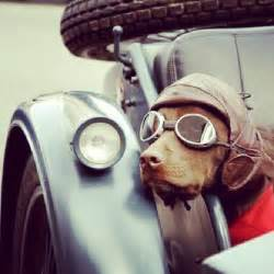 Dog Motorcycle Helmet and Goggles