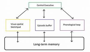 Types, Of, Memory, In, Psychology, Explained