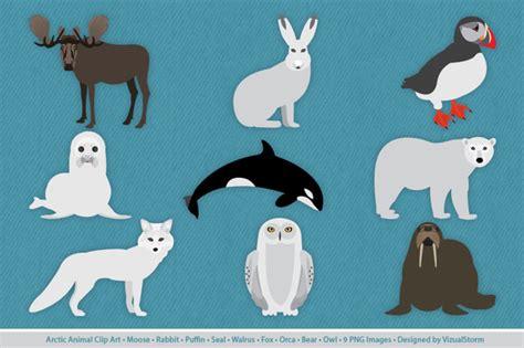 arctic hare cliparts   clip art