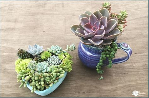 planting succulents in containers planting succulents in containers without drainage drill 4262