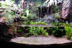 Pflanzen Terrarium Einrichten : paludarium construction journal paludarium aquarium aquarien aquarium fische ~ Orissabook.com Haus und Dekorationen