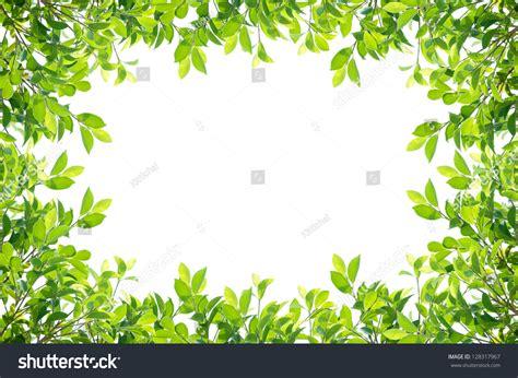 framing leaves leaves frame isolated on white background stock photo 128317967 shutterstock