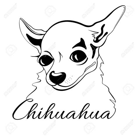 cute chihuahua drawing  getdrawings