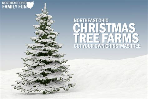cut your own christmas tree westminster md cut your own trees in northeast ohio