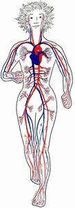 How To Increase Blood Flow Through The Heart From