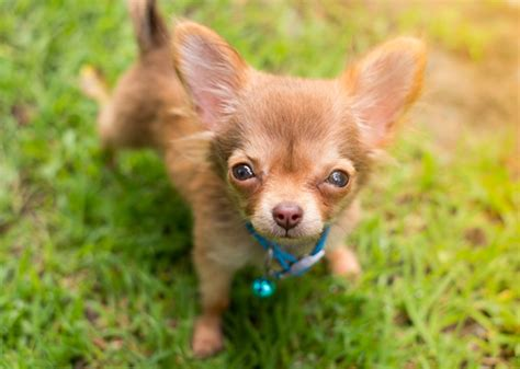 Most Popular Puppy Names Of