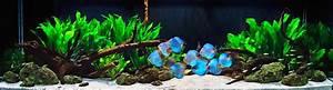 Discus Fish Tank Setup - Discus Fish Types