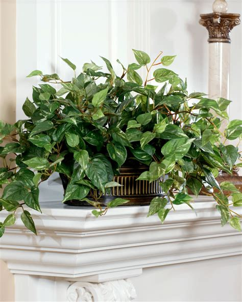 Realisitc Silk Pothos Planter At Petals