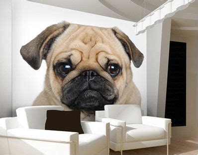 portrait   pug wall mural cute pet dog puppy art