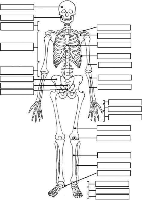 skeletal system coloring page human skeletal system
