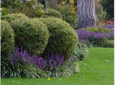 1000+ images about Liriope muscari on Pinterest Gardens