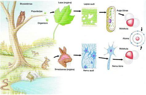 Kurss: Bioloģija
