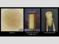 New scaffoldfree 3D bioprinting method available for