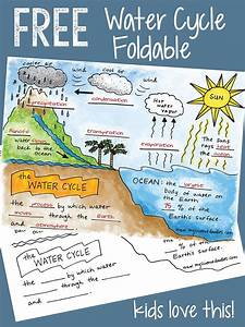 Free Water Cycle Interactive Notebook Activities  U0026 More
