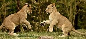 The Cincinnati Zoo Blog - Part 3