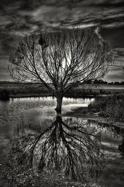 I Do Love Reflection Photos I May Have To Give Them Their