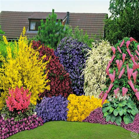 flowering hedge 40 perennial garden 5 shrubs buy online order yours now