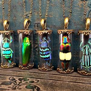 Real Insect Necklace