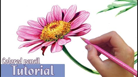 Coloring Flowers With Colored Pencils by How To Draw And Shade A Flower In Colored Pencil