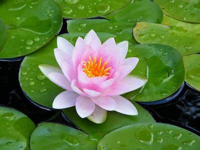 jenis tanaman air mudah didapat menanam tanaman