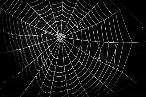 spider web stock  pictures royalty