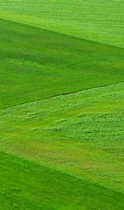 Natural Grass - Download Mobile Phone full HD wallpaper