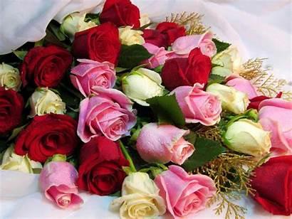 Bouquet Roses Pink Colors Flori Cu Various