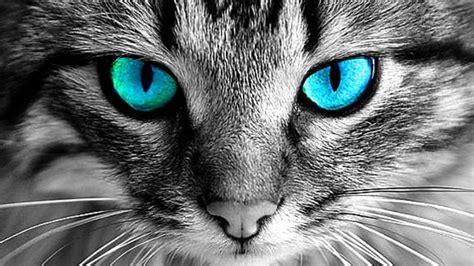 cats eyes youtube