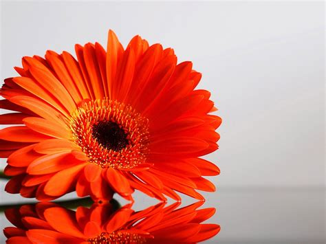 orange flowers hd background