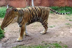 Crossbreed Of Tiger And Dog | www.pixshark.com - Images ...