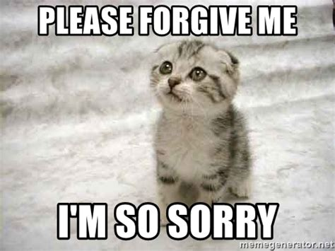 Forgive Me Meme - please forgive me i m so sorry the favre kitten meme generator
